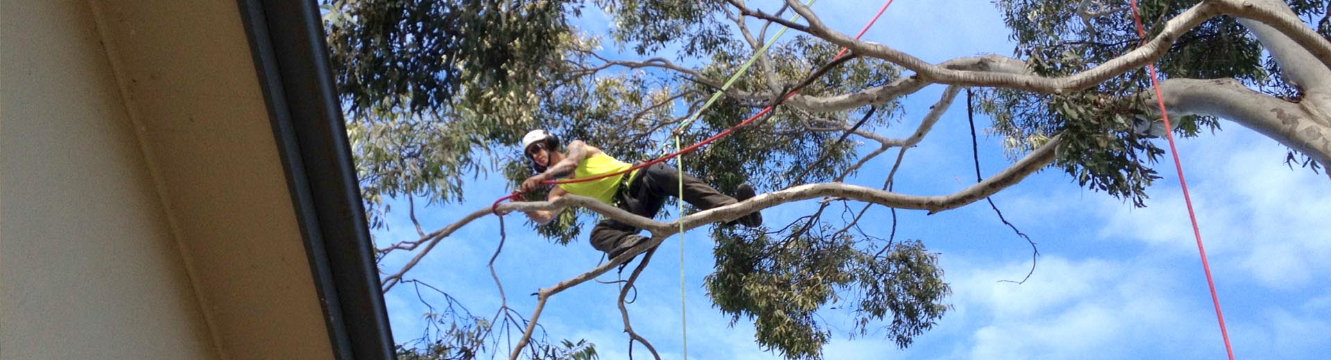 Tree & Hedge Pruning
